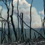 stock-footage-forest-fire-smoke-through-black-charred-burned-trees-dangerous-destructive-blaze-destroyed-dozens